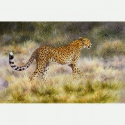 CHEETAH ALONE