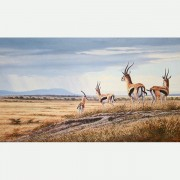 GAZELLES - ON THE PLAINS